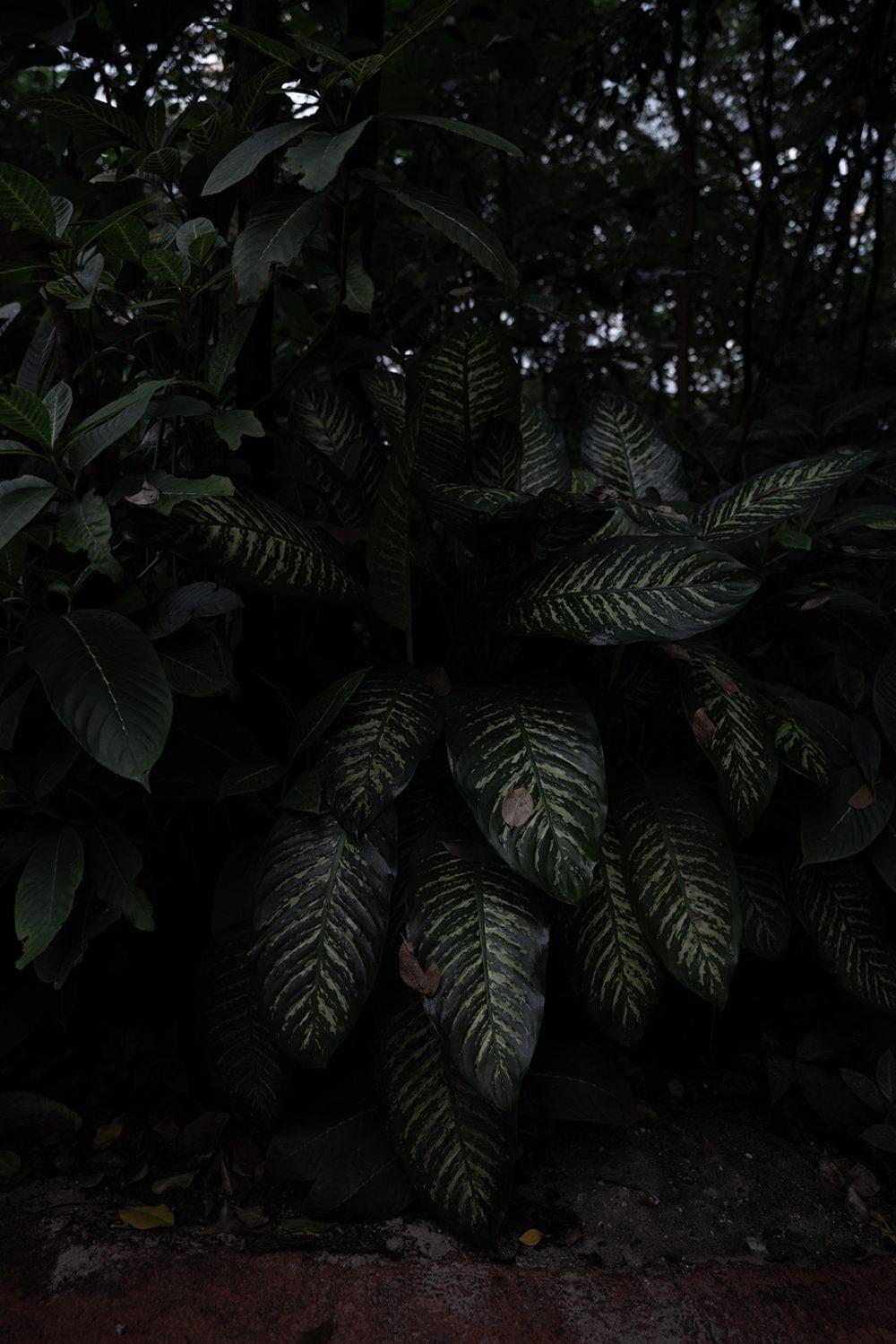 foliage-plant-exotic